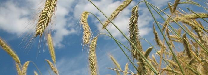 Havermoutvlokken wordten in Amerika oat flakes genoemd.