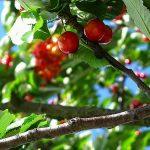 Wat zijn flavonoïden en wat doen ze voor je?