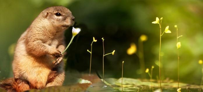 Zo chagrijnig als deze eekhoorn wil je niet zijn. Alhoewel misschien het ontvangen boeket bloemen ietwat tegenviel.
