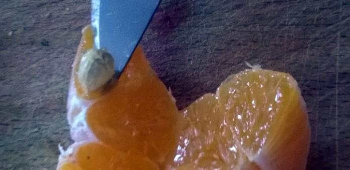 Lifehack 9: de mandarijn ontpitten.