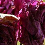 Fabel: van water uit de magnetron gaan planten dood
